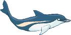 dolfijnjpegl