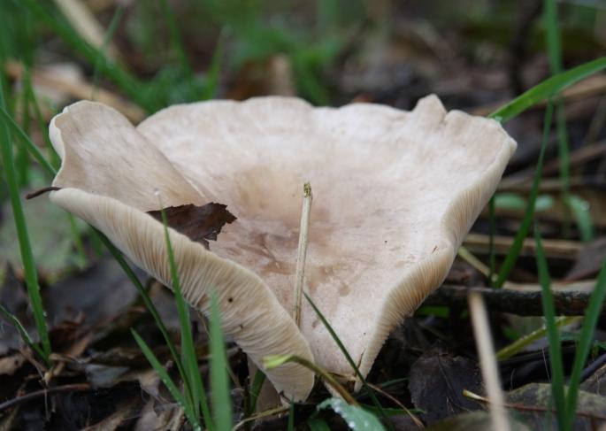 paddenstoelen4