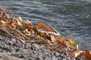 Herfstbladeren langs Lek