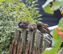 meesjes wachten op hek