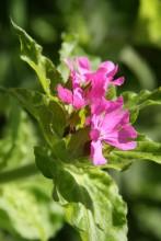 bloem eendenkooi 7