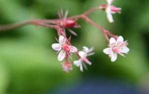Bloemen Kees