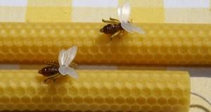 Bijenkaarsen