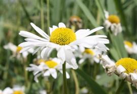 Bloemen Kinderdijk 4