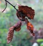 Herfst Loetbos 2