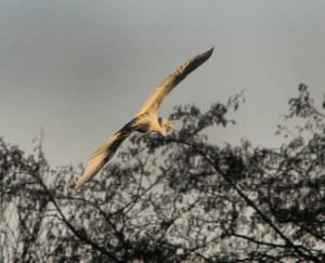 Reiger2 (Small)