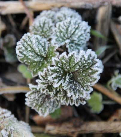 Plantje bevroren (Small)