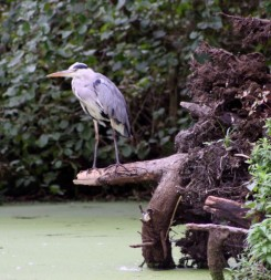 Reiger2 (3) (Small)