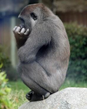 Gorilla man 1 (Small)