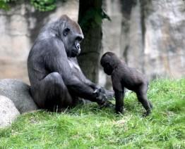 Gorilla moeder met jong 1 (Small)