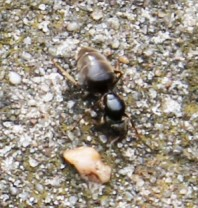 Vliegende mieren 2 (Small)