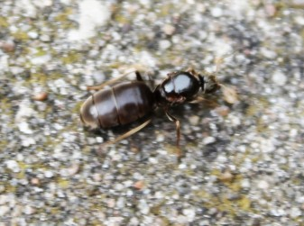 Vliegende mieren 4 (Small)