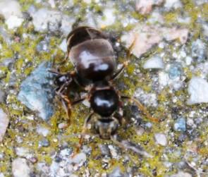 VLiegende mieren (Small)