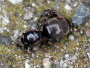 Vliegende mieren1 (Small)