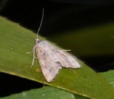 Kroosvlinder - kopie (Small)