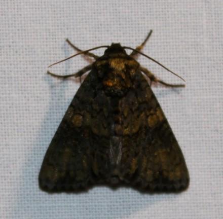 Nachtvlinder 4 (Small)