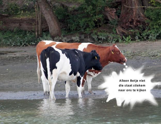 koeien-e-small
