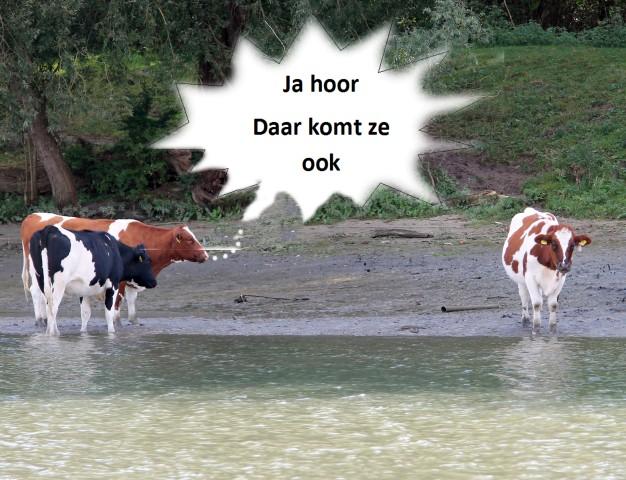 koeien-g-small