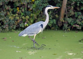 reiger-small