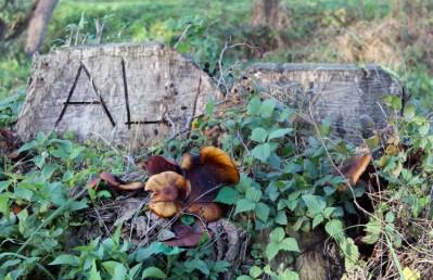 paddenstoeln-al-small