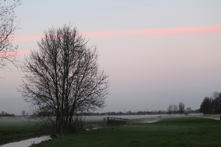 weiland-mist-1-small
