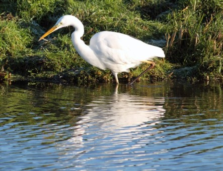 witter-reiger-5-small