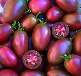 tomaen paars