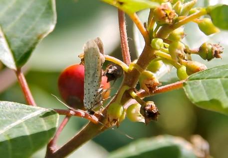 Insect (Medium)