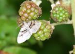 Vlinder 2 (Medium)