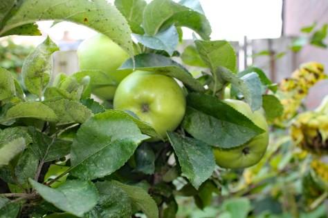 Appels (Medium)