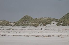 Duinen Noordzee (Medium)