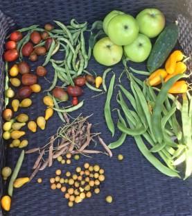 Groente tuin (Medium)