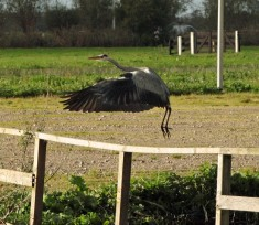 Reiger 4 (Small)