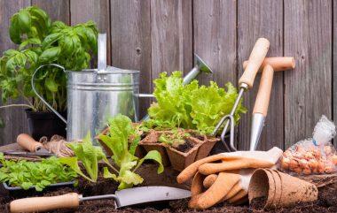 Tuinieren-met-groente-planten-1200x762_c