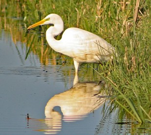 Witte reiger sloot 4 (Small)