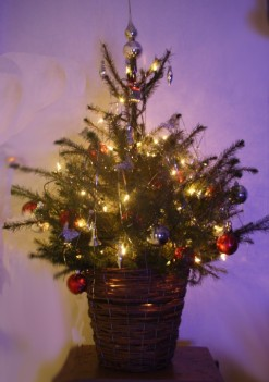 Kerstboom (Small)