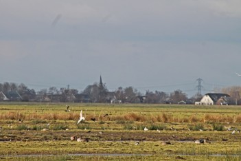 Vogels 1 (Small)