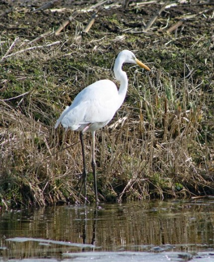 Reiger wit 5 (Small)