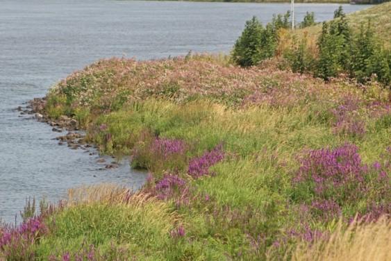 Kinderdijk 15 (Klein)