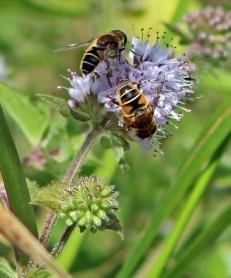 Bijen (Klein)
