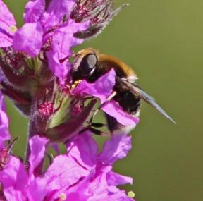 Bijene 1 (Klein)