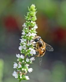 Bijen 4 (Middel)