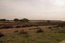Heide (Middel)