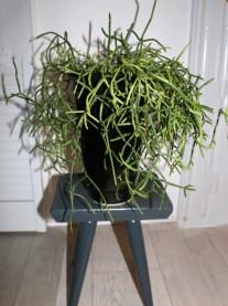 Plant 1 (Klein)