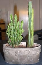 Plant 3 (Klein)