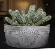 Plant 4 (Klein)