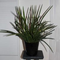 Plant 6 (Klein)