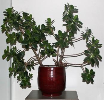 Plant 7 (Middel)