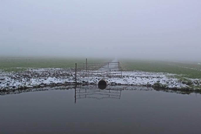 Hek in mist (Middel)
