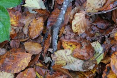 Herfst Loetbos 4